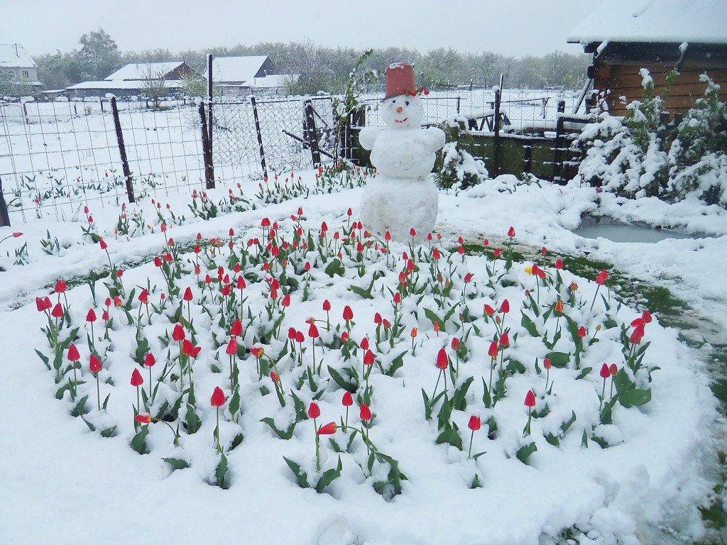 зима весной картинки смешные фасон