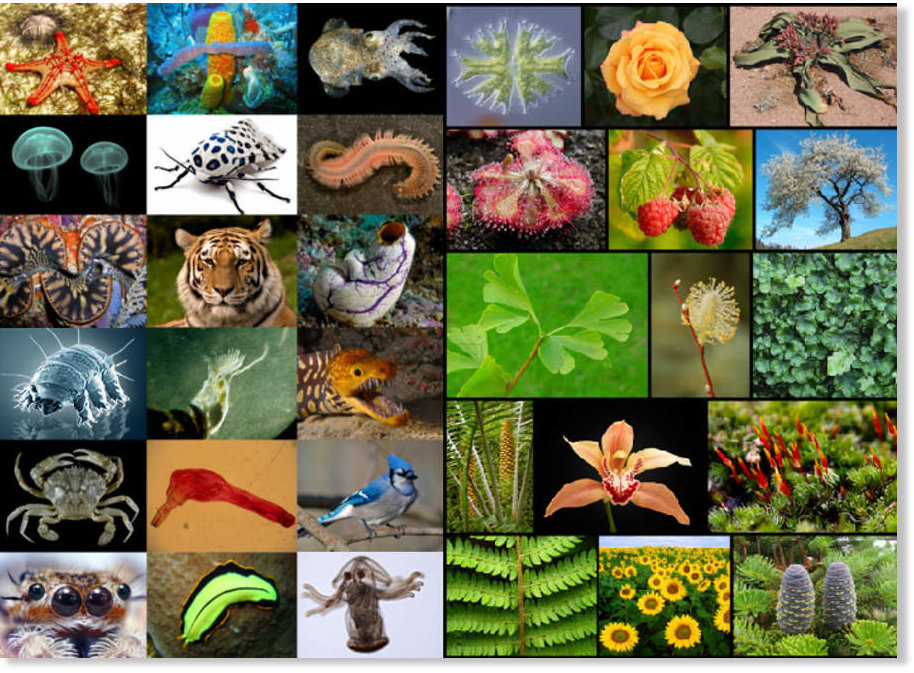 plants and animals - 900×655